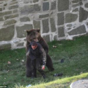 Un oso ataca a un hombre en un parque 8