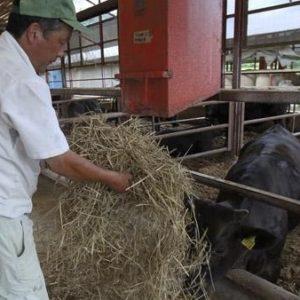 Japón prohibió la distribución de carne radiactiva de Fukushima 27