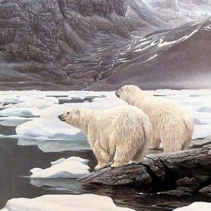 El Ártico para el 2018 sus veranos ya no tendrán hielo 7