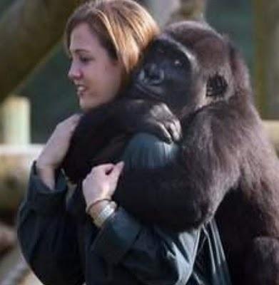a07bb170c4a36161aa1f8f4859c19794 - Aprueban el matrimonio entre un gorila y una mujer