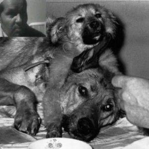 El perro con dos cabezas de Demikhov 21