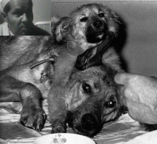 aaa036e4cb16038f90e128d8e39c714f - El perro con dos cabezas de Demikhov