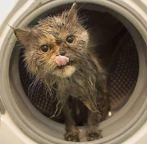 Una gata sobrevive al lavado y centrifugado en una lavadora 2