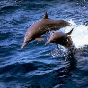 Cuerpo de Hombre es rescatado por Delfines en Estados Unidos 22