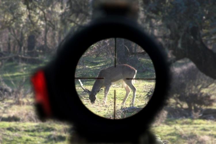 4a071c64184f6ed127d1b90fcde1a863 - Letizia Ortiz nos cuesta 70.000 euros a todos por su pasión por la caza