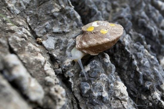84c42b9986b8cecdea81ed6abb66c108 - Caracoles asiáticos invaden costas del Río de la Plata en Argentina y Uruguay afectando la biodiversidad