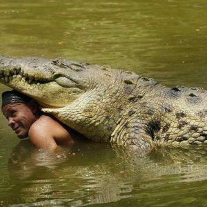 Un cocodrilo de 445 kilos, el mejor amigo de un pescador costarricense 21