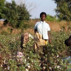 Victoria`s Secret explota a niños africanos que producen algodón 29