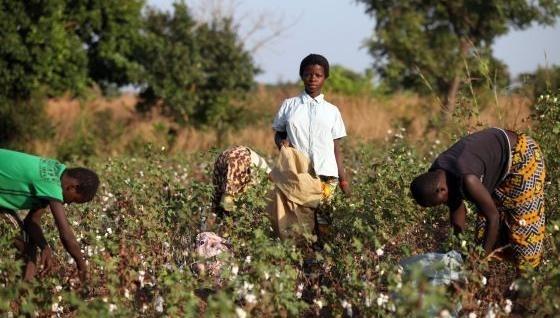 Victoria`s Secret explota a niños africanos que producen algodón 9
