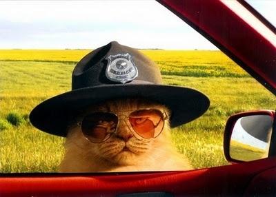 5045d31d4bcce03d9de4f05976219417 - Honrarían a gato policía ruso que murió cumpliendo su deber