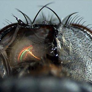 El cerebro de las moscas es más veloz que los ordenadores modernos 27