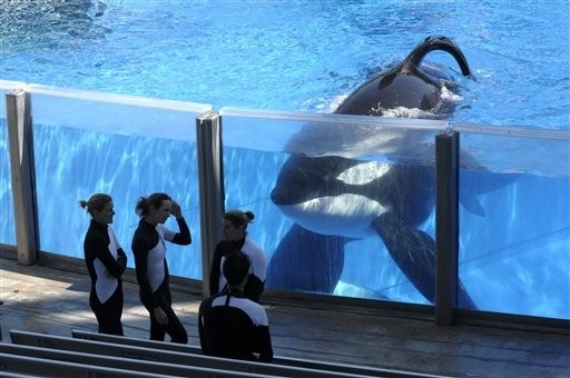 "Curiosa demanda de cinco orcas por ""esclavitud"" 11"