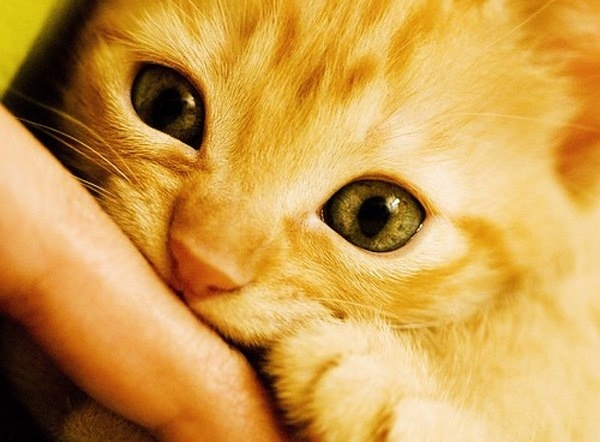 50 curiosidades sobre gatos 10
