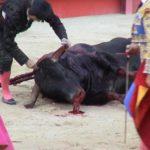 El PP aplaude que se emitan corridas de toros en horario infantil 5