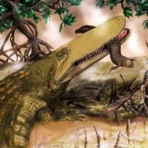 Descubren nuevos cocodrilos prehistóricos en Marruecos 66