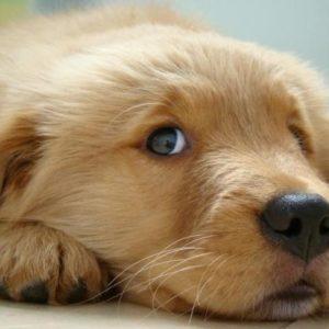 ¿Cuántas palabras nos pueden entender los perros? 20