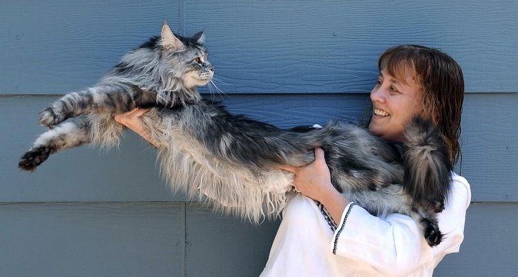 084e87a704762fed2247732a795060ad - El gato más grande del mundo