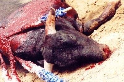La crueldad y la tortura animal, marca de España 12