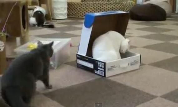 Gato encierra a otro gato en un caja 14