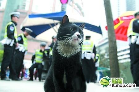 a549e13d40e787f171ad57b349382ed8 - Gato Policia en Shapingba, China