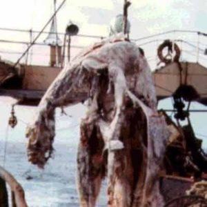 El monstruo marino de Nueva Zelanda 27