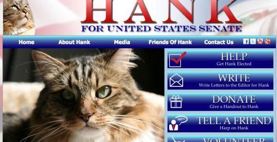 noticias Gato es candidato al senado de Estados Unidos