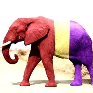 Documental: El elefante del Rey 21