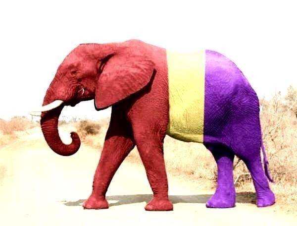 Documental: El elefante del Rey 9
