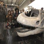 Hallan el cráneo del dinosaurio más grande de Europa 7