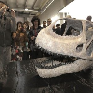 Hallan el cráneo del dinosaurio más grande de Europa 28