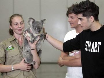 Un cantante afirma que contrajo enfermedad sexual de un koala 22
