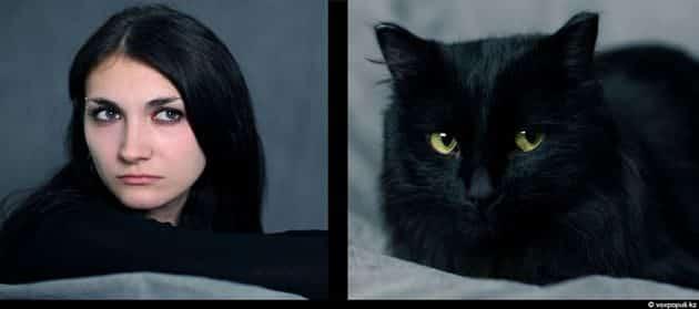 Tu mascota se parece a ti, ya sea un perro o un gato 22