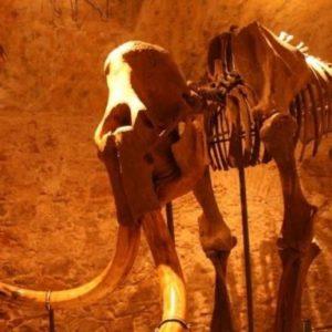 El mamut más pequeño medía 90 cm de alto y habitó en la isla de Creta 31