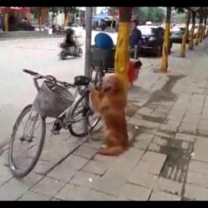 El increíble perro guardián de bicicletas 28