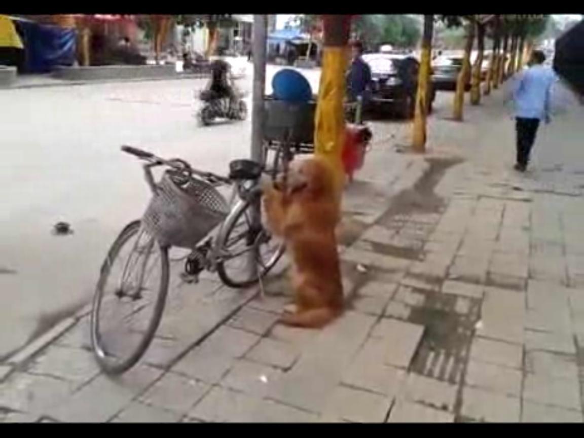 70ef4777a4e277b1b938d90f28ffaaf3 - El increíble perro guardián de bicicletas