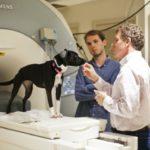Descubren como funciona el cerebro de un perro 6
