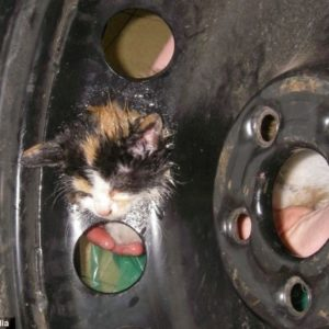 Gatito perdido es salvado de la rueda de un coche, su cabeza estaba pegada a la llanta 4