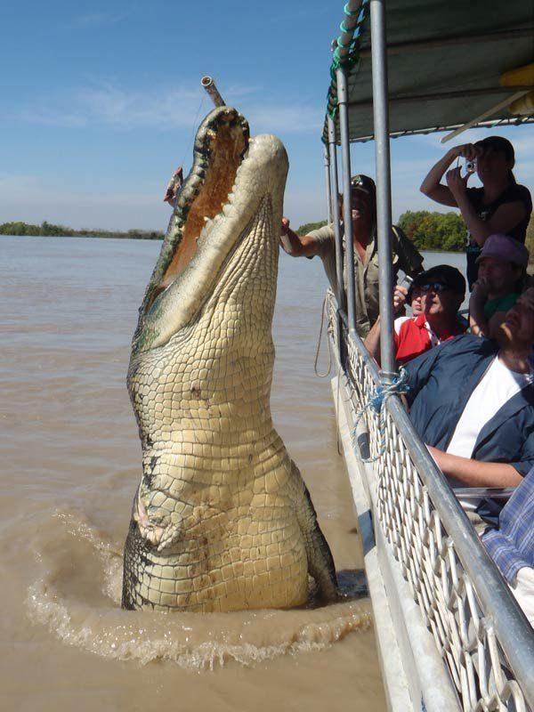 noticias Confirman que la impresionante fotografía de un cocodrilo gigante saltando junto a un bote es real