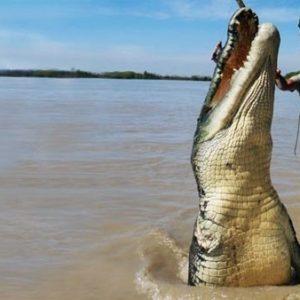 Confirman que la impresionante fotografía de un cocodrilo gigante saltando junto a un bote es real 26