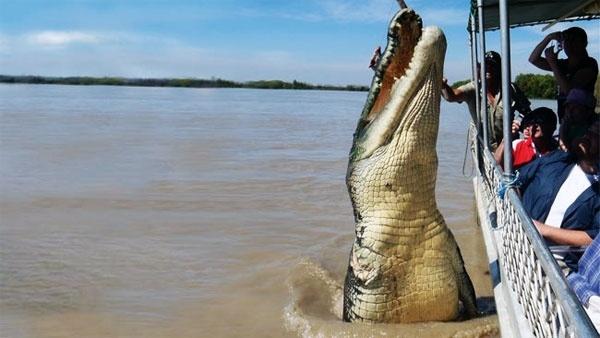 Confirman que la impresionante fotografía de un cocodrilo gigante saltando junto a un bote es real 1