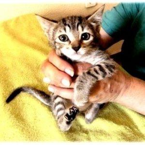 Refugio de gatos busca voluntarios y casas de acogida en Murcia 8