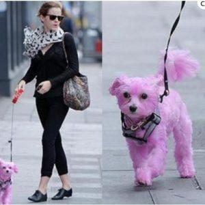 Emma Watson con perro rosa: la acusan de maltrato animal 82