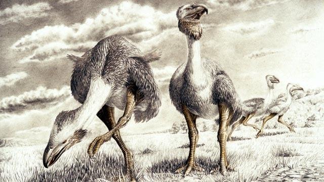 86e782db385e82c686a4da04c4c8d06f - Investigadores encuentran huellas fósiles de hace 48 millones de años en la Antártica
