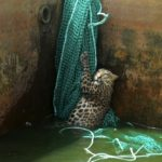 Cómo rescatar a un leopardo de un depósito de agua 9