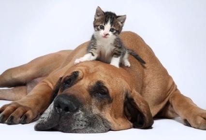 c2480c76b8a32192d19515b59d84b240 - Excusas más comunes para justificar el abandono de una mascota