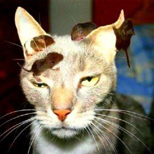 Intenta salvar a un ratón de un gato y se infecta con la Peste Negra 22