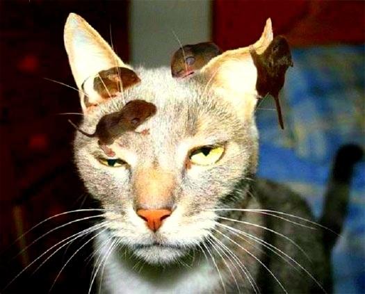 dd04971c6561b6efae319011f6aa0a67 - Intenta salvar a un ratón de un gato y se infecta con la Peste Negra
