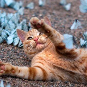 Un gato jugando en un paraíso de mariposas azules 22