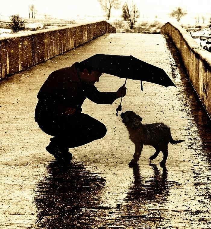 Animales, amigos leales 10