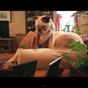 Rolling in the Deep de Adele reinventada por un perro 19